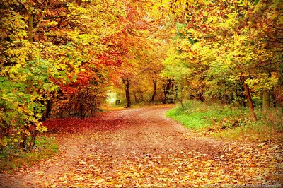 tricot-automne