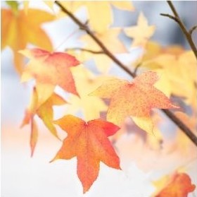 automne tricot